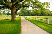 White Fencing Encloses Pastures On Horse Property In The Midwest.