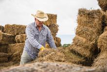 Ranchers Stacking Hay Bales. B...