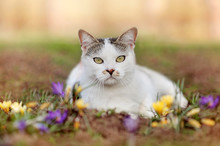 Mixed Breed Cat Laying On The ...