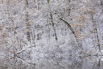 Panel Szklany Zima Snow flocked trees on the shoreline of Hall Lake with reflections in calm water, Yankee Springs State Park, Michigan, USA