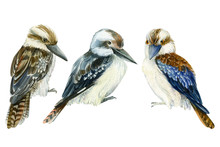 Tropical Kookaburra Birds, Kingfisher On A White Isolated Background, Watercolor Illustration, Hand Drawing