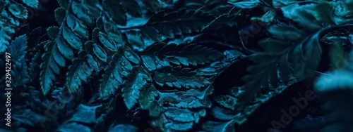 Obraz Blue plant leaves at night as surreal botanical background, minimal design - fototapety do salonu