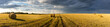 Scene with haystacks on the field in autumn sunny day. Rural landscape with cloudy sky background. Golden harvest of wheat in evening. Panorama.