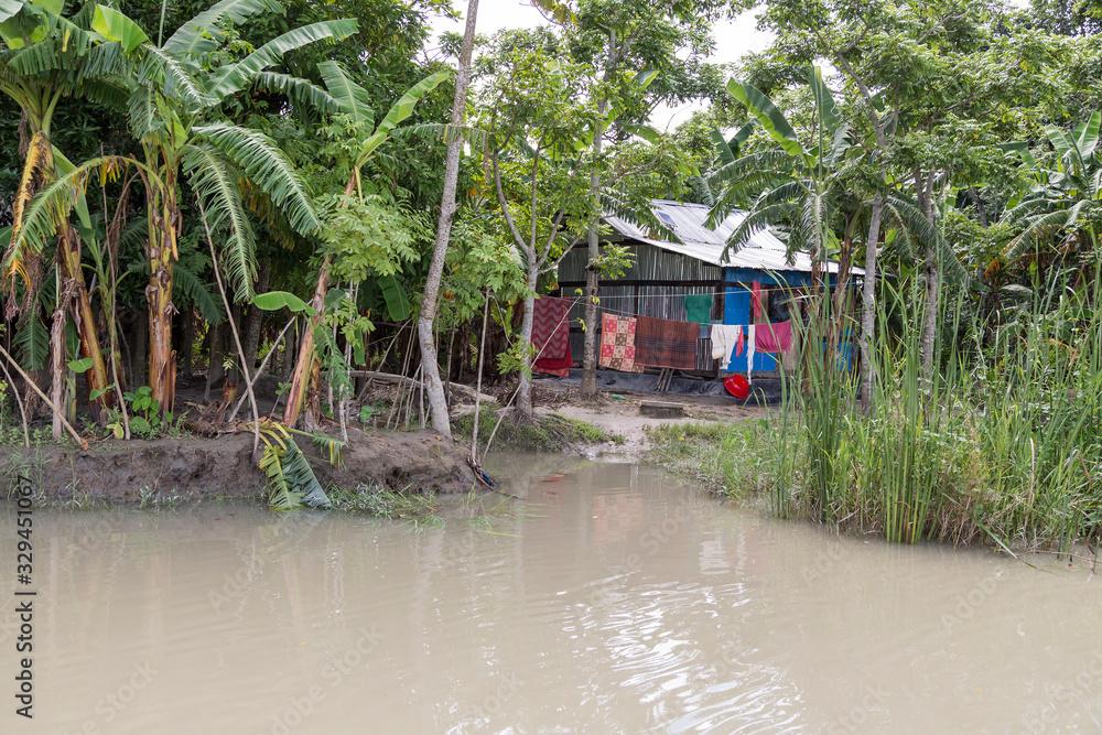 Fototapeta Rural house in the lush green backwaters of Barisal, Bangladesh