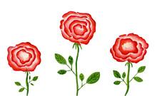 Hand Drawn Roses Poster, Gouac...