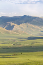 Yurt Camp In The Steppe, Grass...