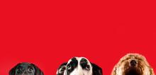 Three Dogs Looking Upward With...