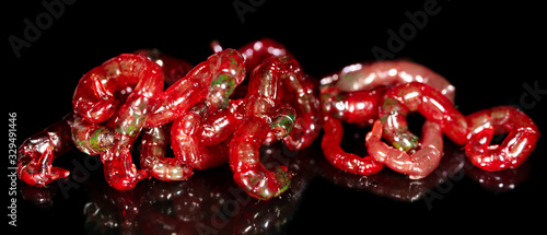 Fotografia, Obraz Red bloodworm worms isolated on a black background