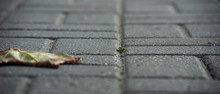 Dry Leaves On The Paving Stone...