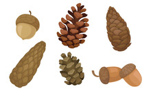 Fir Cones And Acorns Isolated On White Background Vector Set