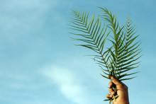 Fern Or Palm Leaf In Hand On B...