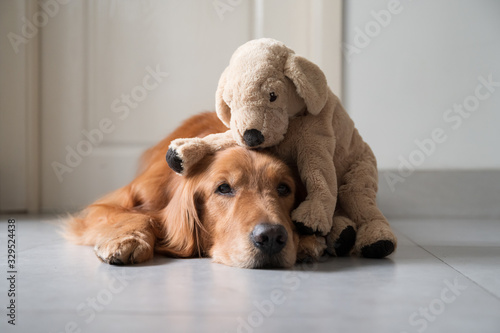 Fotomural Golden retriever and puppy puppet toy