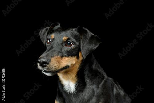 Carta da parati Portrait of an adorable Jack Russell Terrier