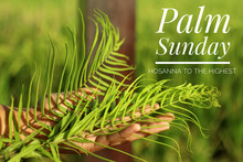 Palm Sunday Concept With Christian Inspiration Quote - Hosanna To The Highest. With Young Woman Hand Holding Fresh Fern Or Palm Leaf On Blurry Green Nature Background.