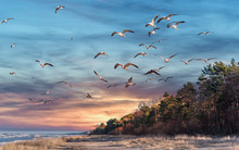 Birds Over A Baltic Sea Beach ...