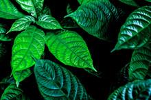 Green Leaf With Rain Drop In J...