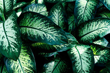 Tropical Leaves, Large Green F...