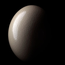 Ostrich Egg Isolated On Black ...