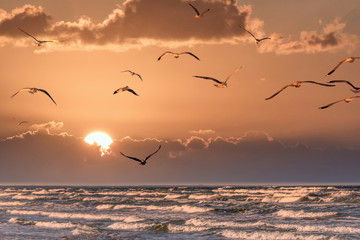 Fototapeta Do salonu Birds at Sunset over a Baltic Sea Beach on a Sunny Day