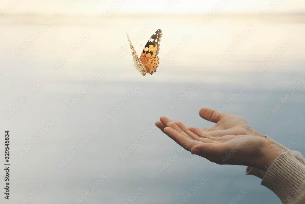 Fototapeta butterfly flies free from a woman's hand
