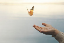Butterfly Flies Free From A Wo...