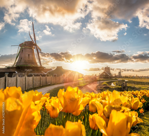 Obraz Traditional Dutch windmills with tulips against sunset in Zaanse Schans, Amsterdam area, Holland - fototapety do salonu