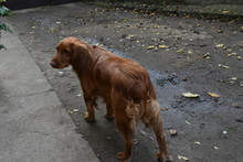 A Beautiful Dog On The Street,
