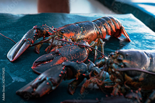 The morning catch - Gloucester lobster Slika na platnu
