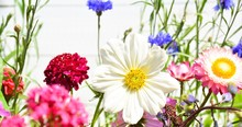 Summer Background - Colorful W...