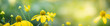 Beautiful nature view of flower on blurred background in garden with copy space for text using as summer background natural flower plants landscape, ecology, fresh cover page concept.