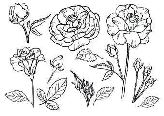 Set of roses flowers on white. Vector illustration. Outline flowers are element for design. Template forcoloring book, greeting card, postcard, wedding card.