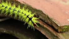 Colorful Caterpillar Walks Off...