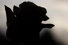 Silhouette Black Rose Petals S...