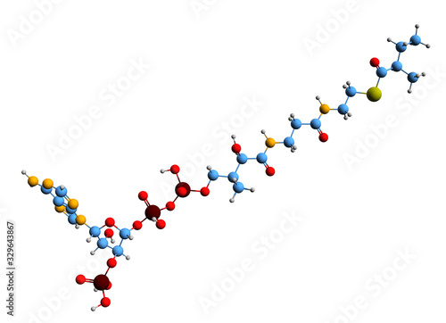 3D image of 2-Methylbutyryl-CoA skeletal formula - molecular chemical structure Canvas Print