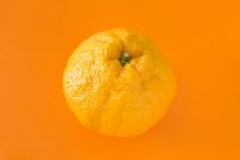 Closeup Sumo Orange On Orange Background