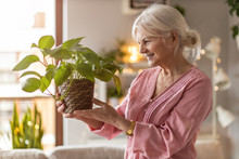 Senior Woman Taking Care Of Her Potted Plants At Home