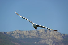 Beautiful Seagull Against The ...