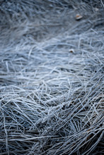 Frost Covered Grass In Yosemit...