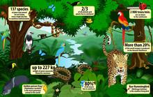 Vector Rainforest  Infographic...