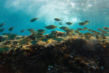 Fototapeta na wymiar Fishes in group