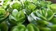 green succulent cactus