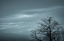 Silhouette Dead Tree On Dark Dramatic Sky And White Clouds Background For Death And Peace. Halloween Day Background. Despair And Hopeless Concept. Sad Of Nature. Death And Sad Emotion Background.