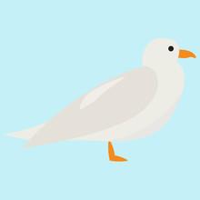 White Seagull, Illustration, V...