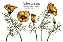 Orange California Poppy Flower...