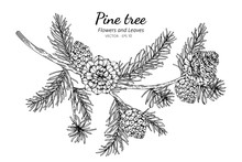 Pine Cones And Leaf Drawing Il...