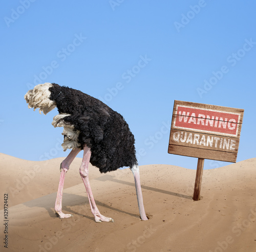 scared ostrich with head in sand near warning quarantine wooden signboard Canvas Print