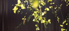 Blooming Earrings On The Branc...