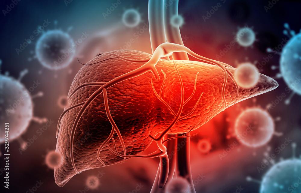 Fototapeta Hepatitis virus with human liver. 3d illustration.