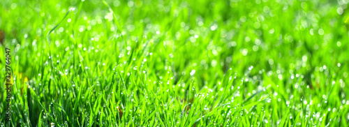 A green field of grass in drops of dew - 329764047