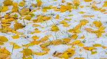 The First Snow, Late Autumn, A...